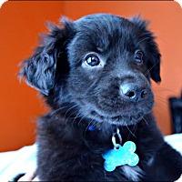 Adopt A Pet :: Tango - Minneapolis, MN