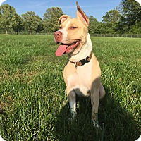 Adopt A Pet :: *ADAH - Winder, GA