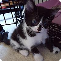 Adopt A Pet :: Jackie - Stafford, VA