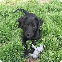Adopt A Pet :: Jasmine - Rocky Mount, NC