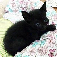 Adopt A Pet :: Rebel - Austin, TX
