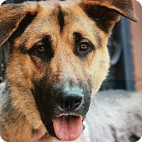 Adopt A Pet :: FRITZ VON FRITZLAR - Los Angeles, CA