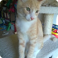 Adopt A Pet :: Romeo - Richmond, VA