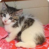 Adopt A Pet :: Nolan - Fairborn, OH