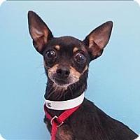 Adopt A Pet :: Sunshine - Portland, OR