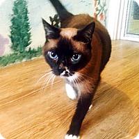Adopt A Pet :: Addie - Allentown, PA