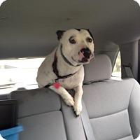 Adopt A Pet :: Savannah - Tallahassee, FL