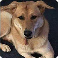 Adopt A Pet :: Peni - Salem, OR
