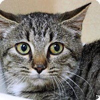 Adopt A Pet :: Suzie - Lincolnton, NC