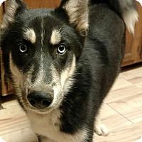 Adopt A Pet :: Ranger - Cedar Crest, NM