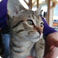 Adopt A Pet :: Rika - Clarkson, KY