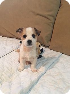 Terrier (Unknown Type, Small) Mix Puppy for adoption in Powder Springs, Georgia - Curly