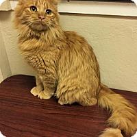 Adopt A Pet :: Casper - Tempe, AZ