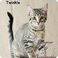 Adopt A Pet :: Twinkle - Oklahoma City, OK