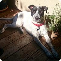 Adopt A Pet :: Bandit - Anaheim, CA