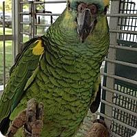 Adopt A Pet :: Raffle & JoJo - Punta Gorda, FL