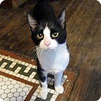 Adopt A Pet :: Martin - Brooklyn, NY
