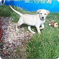 Adopt A Pet :: Kula - Denver, CO