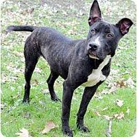 Adopt A Pet :: Winnie - Chicago, IL