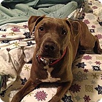 Adopt A Pet :: Chutney - San Diego, CA