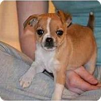 Adopt A Pet :: Blossom - Staunton, VA
