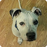 Adopt A Pet :: Zeus - Claypool, IN