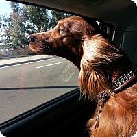 Adopt A Pet :: KC - Vista, CA