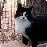 Adopt A Pet :: Kona - Monroe, GA