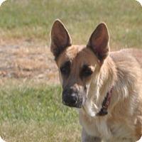 Adopt A Pet :: Lola - Dripping Springs, TX