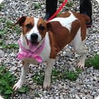 Adopt A Pet :: Brandi - Doylestown, PA