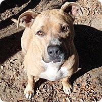 Adopt A Pet :: Fannie May - Ravenel, SC