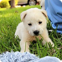 Adopt A Pet :: Baily - Groton, MA