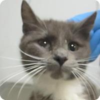 Adopt A Pet :: Belle $20 - Lincolnton, NC
