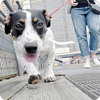 Adopt A Pet :: Chynna Phillips - Jersey City, NJ