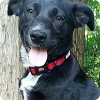 Adopt A Pet :: Sadie - Enfield, CT