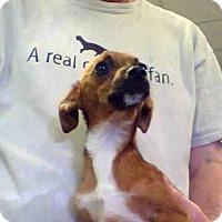 Adopt A Pet :: A594900 - Louisville, KY