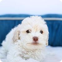 Adopt A Pet :: Bennet - Auburn, CA