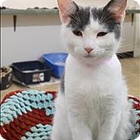 Adopt A Pet :: Suzie - Delaware, OH