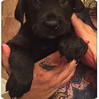 Adopt A Pet :: Tucker - DeForest, WI