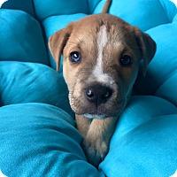 Adopt A Pet :: Tubbs - Mayflower, AR