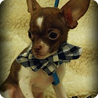 Adopt A Pet :: His Royal Cuteness (R.C.) - Anaheim Hills, CA