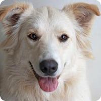 Adopt A Pet :: NOODLE - Kyle, TX