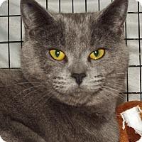 Adopt A Pet :: Raini - Grants Pass, OR