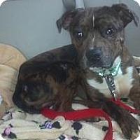 Adopt A Pet :: Tiny Tommy - Hazard, KY