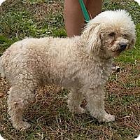 Adopt A Pet :: Simpson - Athens, GA