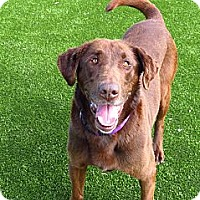 Adopt A Pet :: Molly - Meridian, ID