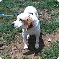 Adopt A Pet :: Moonflower - Southampton, PA