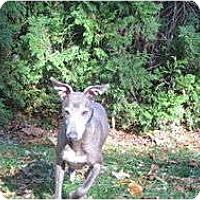 Adopt A Pet :: Koby - Croton, NY