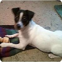 Adopt A Pet :: Thurston - Mooy, AL