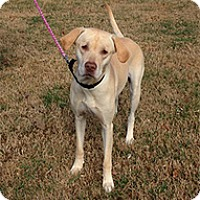 Adopt A Pet :: Delilah - Spring City, TN